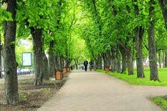 Parque da cidade com os bancos do trajeto do passeio e as árvores verdes grandes Fotos de Stock Royalty Free