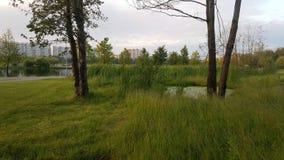 Parque da cidade com uma parte de natur sem tocar imagens de stock