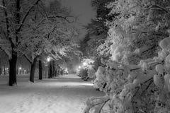 Parque da cidade do inverno na noite Fotografia de Stock Royalty Free