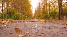 Parque da cidade do outono e folhas de queda que fundem a asa no trajeto Queda sazonal das folhas vídeos de arquivo