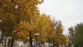 Parque da cidade do outono Folhas da queda do bordo amarelado Movimento lento video estoque
