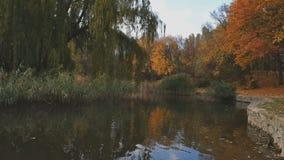 Parque da cidade do outono Parque na queda filme