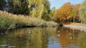 Parque da cidade do outono Parque na queda vídeos de arquivo