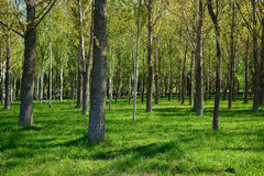 Parque da cidade em Bishkek, Quirguizistão Fotografia de Stock Royalty Free
