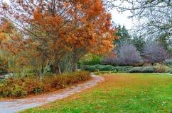 Parque da cidade em um dia da queda com as folhas vermelho-marrons em árvores e em verde Fotos de Stock