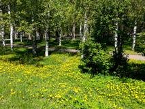 Parque da cidade da mola com árvores e as flores de florescência imagem de stock royalty free
