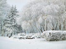 Parque da cidade no inverno Fotografia de Stock