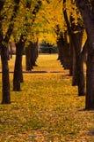 Parque da cidade no outono Imagens de Stock