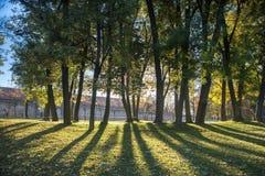 Parque da cidade, silêncio e solidão, árvores, luz do sol, folha amarela em Praga no outono Foto de Stock Royalty Free