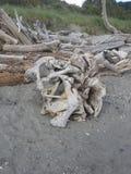 Parque da descoberta, Seattle, Washington imagens de stock royalty free