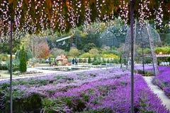 Parque da flor de Ashikaga, Tochigi, Japão fotografia de stock