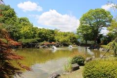 Parque da flor do chery do inverno Fotos de Stock