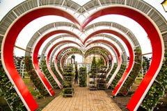 Parque da flor no centro de Grozny Imagem de Stock