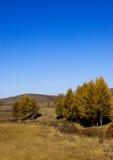 Parque da floresta nacional de Saihanba Fotos de Stock Royalty Free