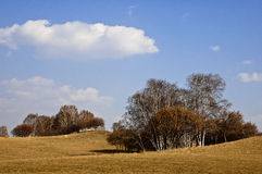 Parque da floresta nacional de Saihanba Imagem de Stock