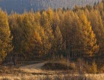 Parque da floresta nacional de Saihanba Imagem de Stock Royalty Free