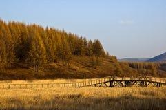 Parque da floresta nacional de Saihanba Fotografia de Stock Royalty Free