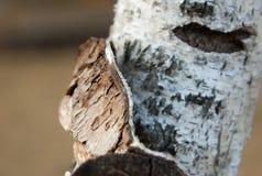 Parque da floresta nacional de Saihanba Foto de Stock