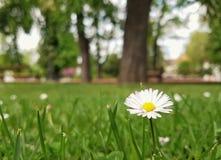 Parque da grama da natureza do verão de Sun da flor Fotos de Stock