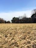 Parque da grama seca Fotos de Stock