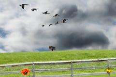 Parque da mola Imagem de Stock Royalty Free