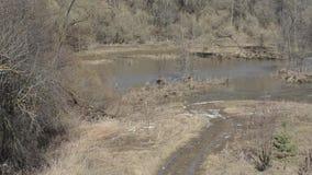 Parque da mola com grama do ` s do ano passado e uma lagoa após a neve fundida pelo vento filme
