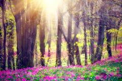 Parque da mola com grama verde, as flores selvagens de florescência e as árvores fotografia de stock royalty free