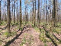 Parque da mola com grama verde e árvores com folhas caídas Imagens de Stock Royalty Free