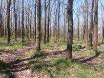 Parque da mola com grama verde e árvores com folhas caídas Foto de Stock Royalty Free