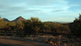 Parque da montanha de Tucson no por do sol imagem de stock