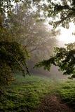 Parque da paisagem na manhã enevoada Fotos de Stock