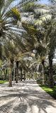 Parque da palma em Dubai fotografia de stock