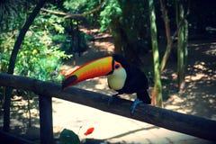 Parque das aves, Brasil. Parque das aves, located on Foz do Iguazu, Brasil. Theme park dedicated to birds an other animals stock photos
