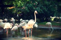Parque das aves, Brasil. Parque das aves, located on Foz do Iguazu, Brasil. Theme park dedicated to birds an other animals stock images