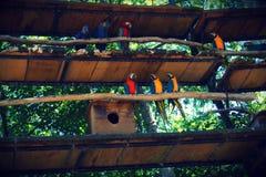 Parque das aves, Brasil. Parque das aves, located on Foz do Iguazu, Brasil. Theme park dedicated to birds an other animals royalty free stock photo