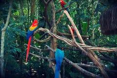 Parque das aves, Brasil. Parque das aves, located on Foz do Iguazu, Brasil. Theme park dedicated to birds an other animals royalty free stock photography