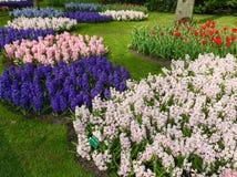 Parque das flores Imagem de Stock