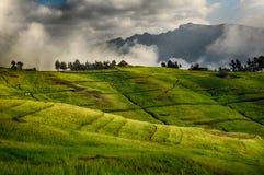 Parque das montanhas de Simien Foto de Stock Royalty Free