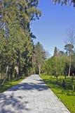 Parque das plantas do sul Foto de Stock