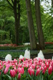Parque das tulipas Fotos de Stock