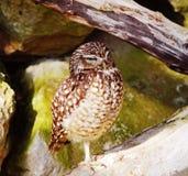Parque de Birdland no Cotswolds fotos de stock royalty free