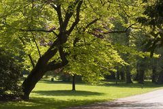 Parque de Brema Foto de Stock Royalty Free