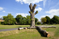 Parque de Brockwell em Brixton, Londres Imagens de Stock Royalty Free