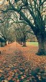 Parque de Cambridge Fotos de archivo libres de regalías