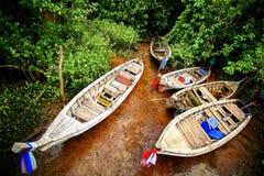 Parque de cauda longa do barco em florestas dos manguezais Foto de Stock Royalty Free