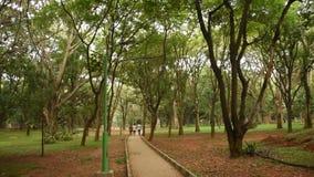 Parque de Cubbon do parque de Sri Chamarajendra, Bangalore, Karnataka video estoque