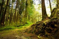 Parque de diversões da floresta de Alishan Foto de Stock