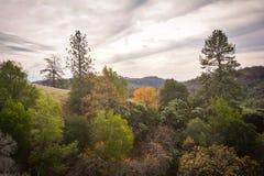 Parque de estado de Henry W Coe cerca de Morgan Hill CA Fotografía de archivo