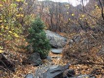 Parque de estado de la montaña de Wasatch imagenes de archivo