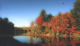 Parque de estado de Nueva Inglaterra Imágenes de archivo libres de regalías